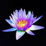 flower representing peaceful results