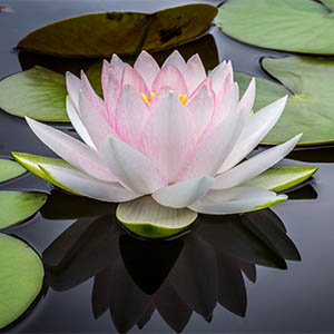 flower representing peaceful results of counselling