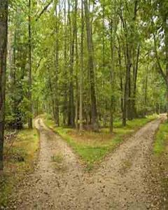 path splitting into two - awarenes brings conscious choice of directions